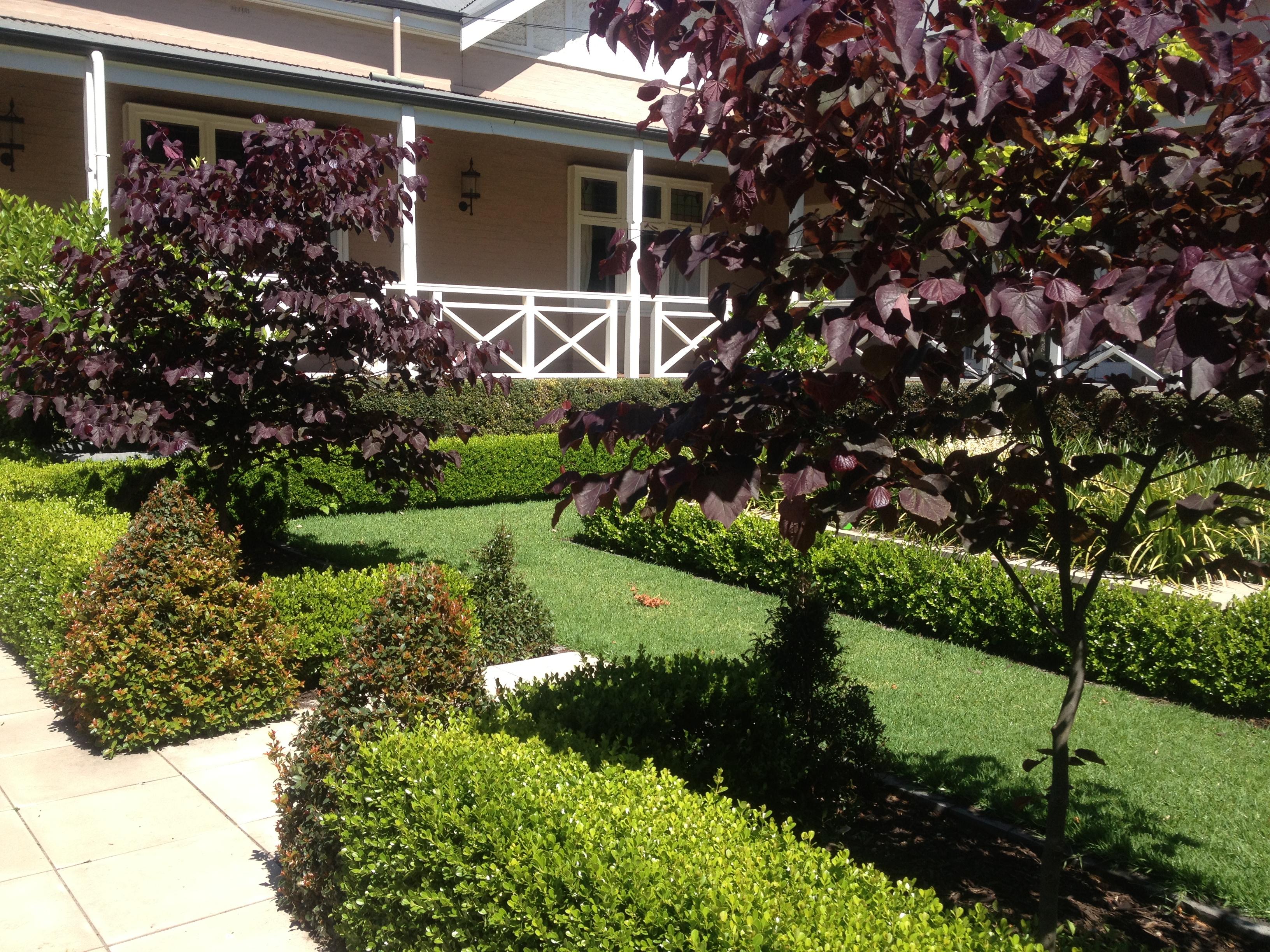 Planting Garden Design Adelaide By Unearthed Landscaping Sa Glenelg Caroline Dawes Garden